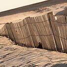 Assateague Island Dunes by Rob Diffenderfer
