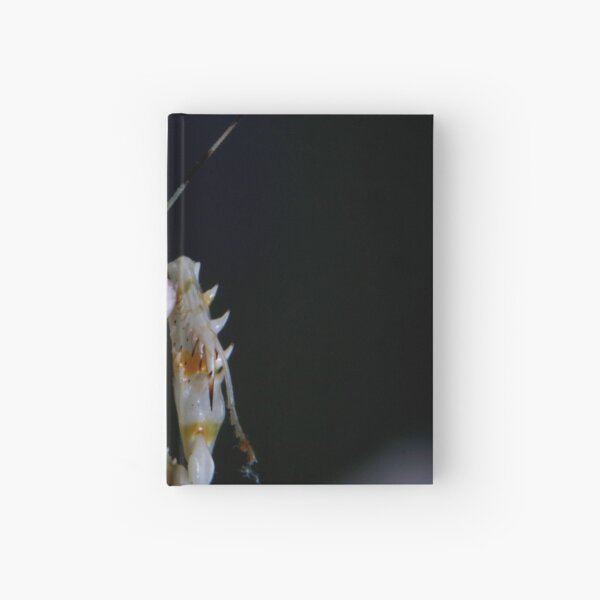 Spiny Mantis Hello Hardcover Journal