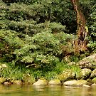 Rainforest Stream by LifeisDelicious