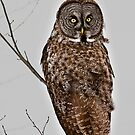 """""""I can be a little on the Owly side ya know"""" by Tim Denny"""