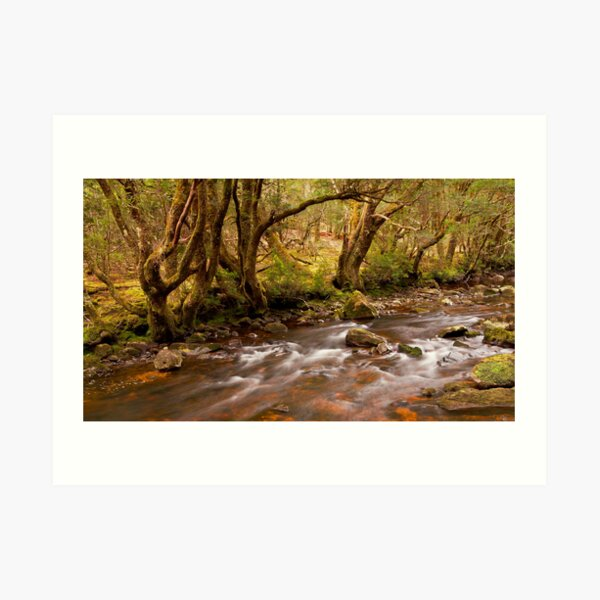 Pencil Pine Creek Art Print