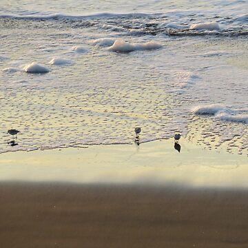 Birds in water by mindfu