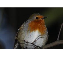 bird Photographic Print