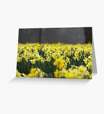 Narcis Greeting Card