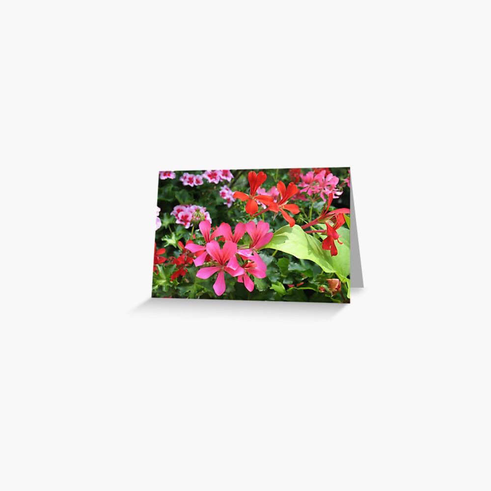 Geranium Delight Greeting Card