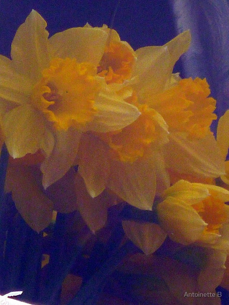Daffodils by Antoinette B