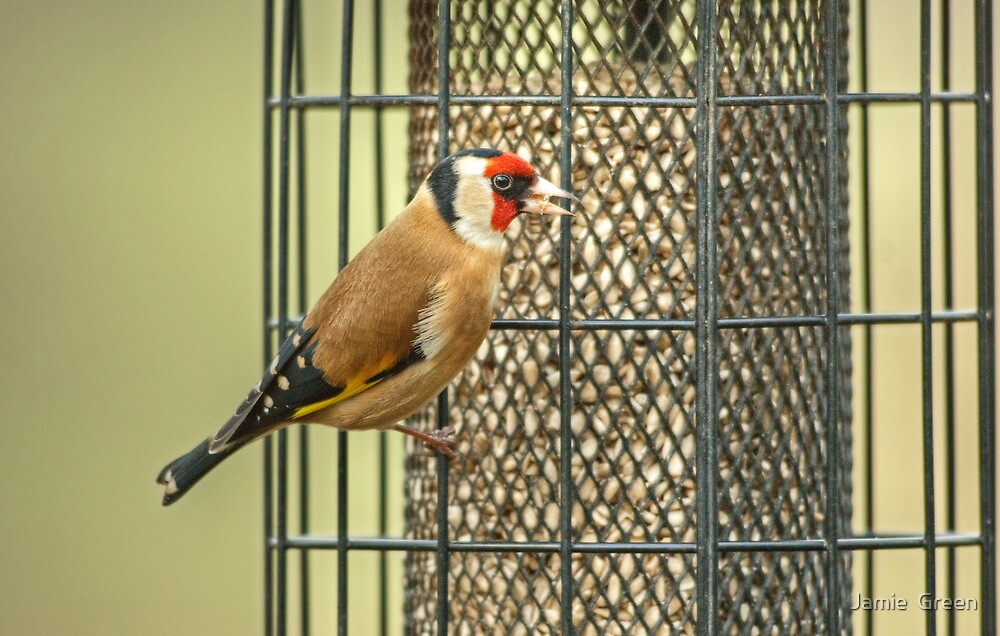 Goldfinch On Feeder by Jamie  Green