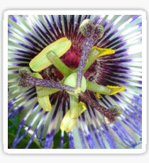 Passion Flower Close Up Sticker