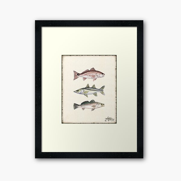 """""""Inshore Slam""""  by Amber Marine ~ watercolor redfish, snook, and trout art, © 2013 Framed Art Print"""