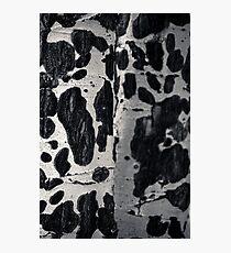Aspen Bark Photographic Print