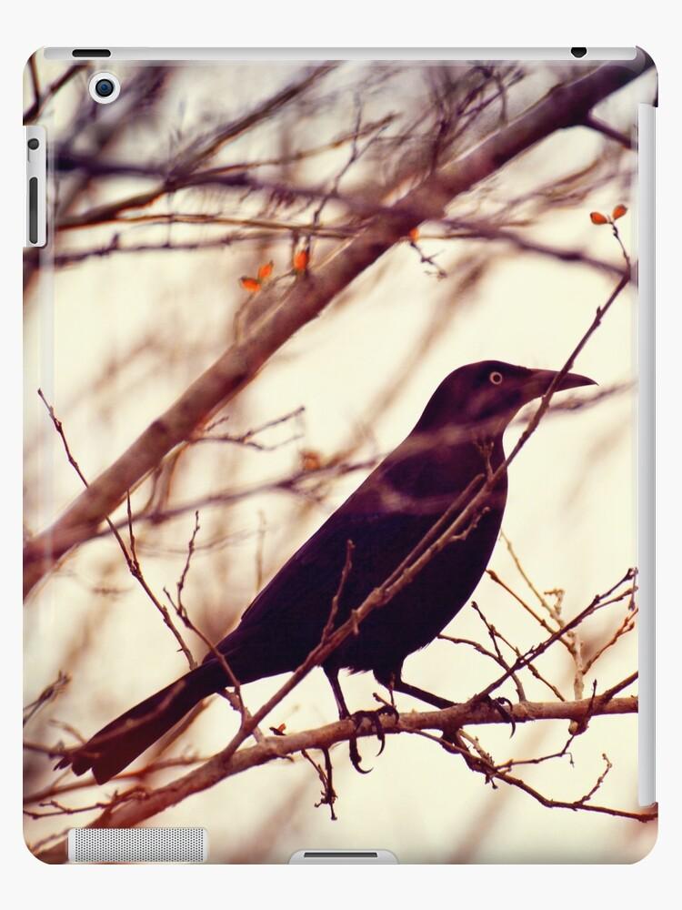 Black Bird by krissihart