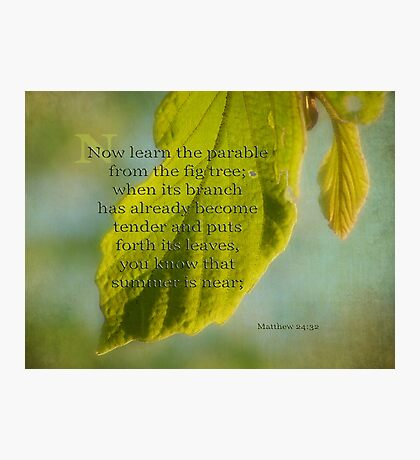 learn from the fig tree-Matthew 24:32 Photographic Print