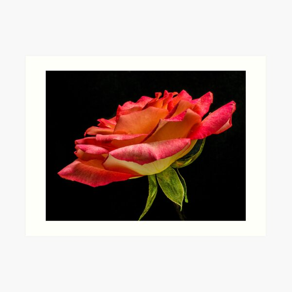 Like Rose Petals Love Water Art Print