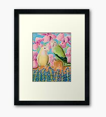 Peach-faced Lovebird Framed Print