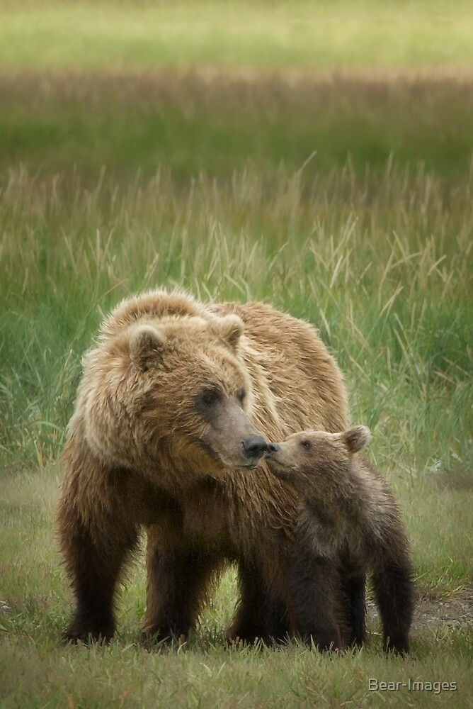 Mother And Cub by Bear-Images