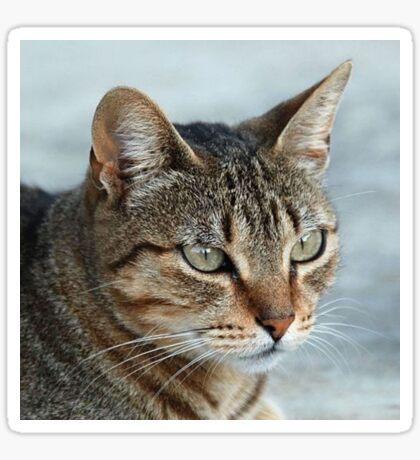 Stunning Tabby Cat Close Up Portrait Sticker