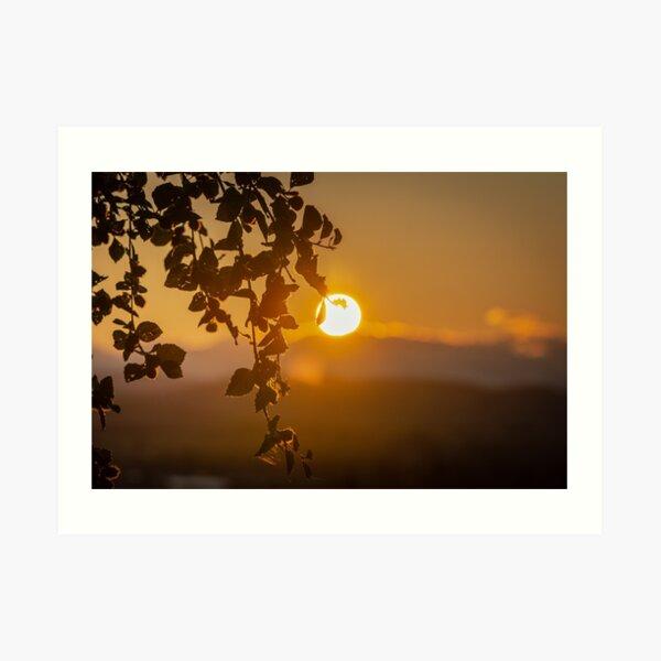 Sunset Leaves Art Print