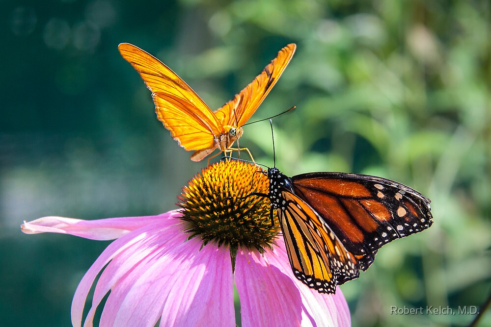 Julia and her Monarch Friend by Robert Kelch, M.D.