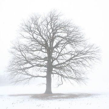 Oak Tree Shine by ArtistDCB