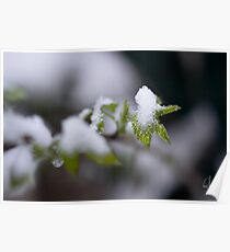 I thought spring was here... Poster