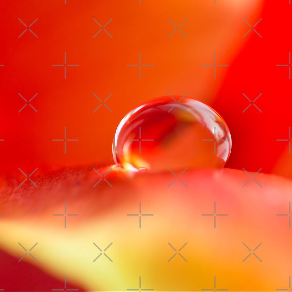 Macro of a raindrop on a petal by marina63