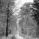 Ippenburger Forst by Harald Walker