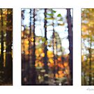 Forest of Jewels. by AlysonArtShop