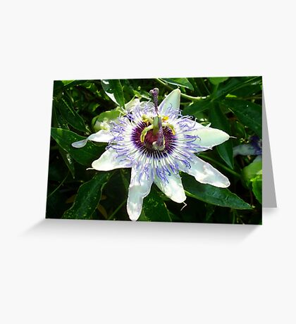 Beautiful Passion Flower With Garden Background Greeting Card