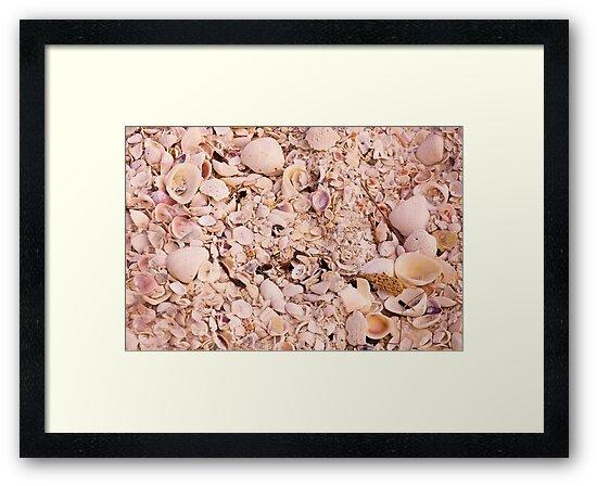 Shellabration by John  Kapusta