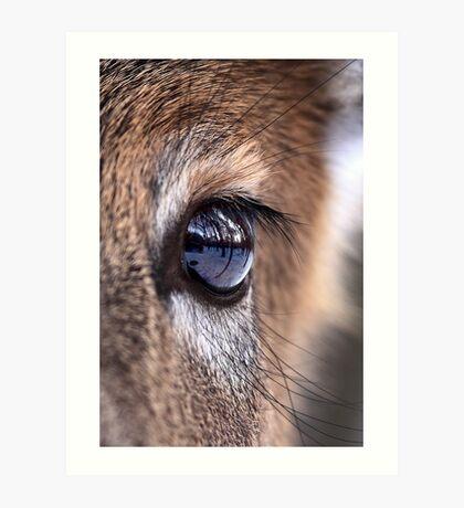 Now thats an eyefull! - White-tailed Deer Art Print