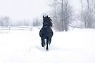 Dashing through the snow - Horse by Jim Cumming