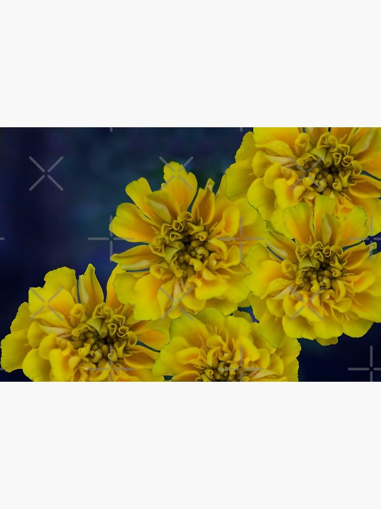 Midnight Blue Yellow Adalia Flowers by chanzds