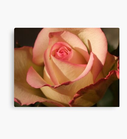 Seduction Rose Canvas Print