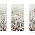 Frosty Morning. by AlysonArtShop