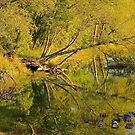 Golden Reflections by NatureGreeting Cards ©ccwri