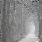 Path in the Fog by Veronica Schultz