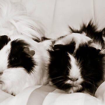 guinea pigs by CreativzDesigns