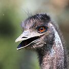 All Smiles for the Camera  Emu Australia  by Kym Bradley