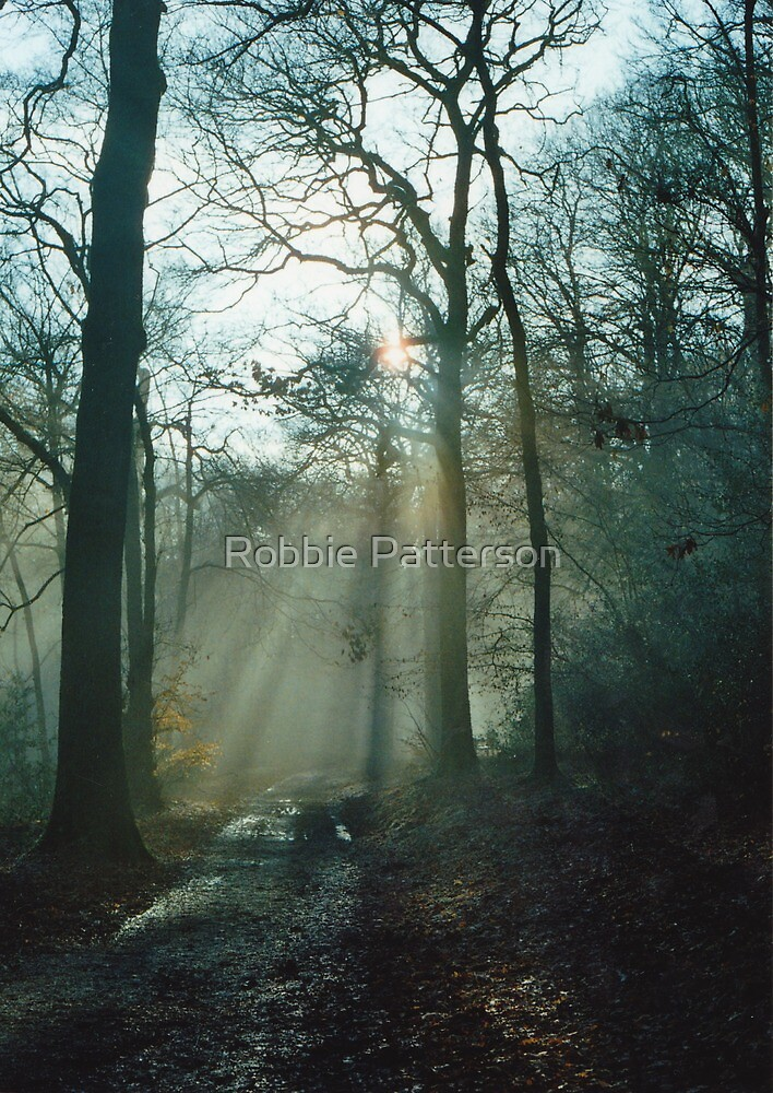 Mist In The Woods 4 by Robbie Patterson