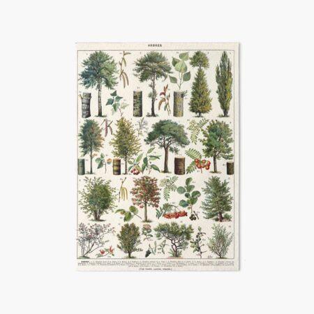 Adolphe Millot - Arbres B - French vintage botanical poster Art Board Print