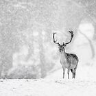 A Stag In The Snow by Patricia Jacobs DPAGB BPE4