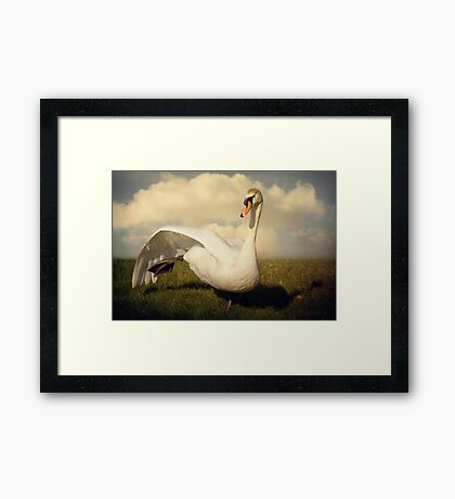 Dancing Swan Framed Print