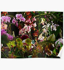 Orchid crescendo Poster