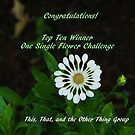 Top Ten Banner - One Single Flower by quiltmaker