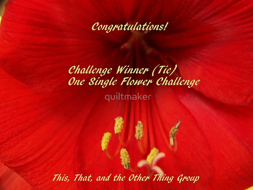 Challenge Winner - One Single Flower by quiltmaker