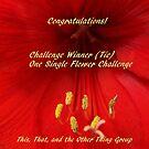 Challenge Winner - One Single Flower by quiltmaker