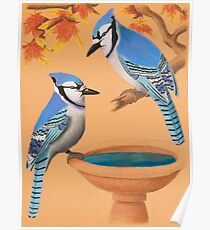 Blue Jays In Fall Poster
