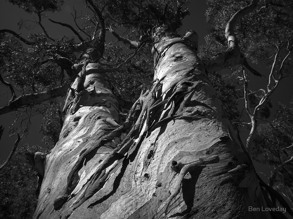Scary Tree- Teringie by Ben Loveday