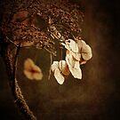 Fading Away by Irina Chuckowree