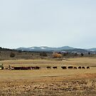 Cattle Country - Meals on Wheels by Betty  Town Duncan